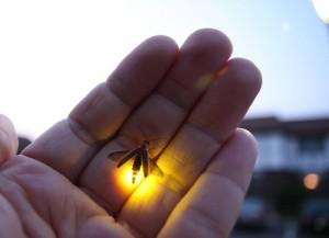 bug,hand,light,firefly,cool-f046206fe921306a6db60e4264733497_h
